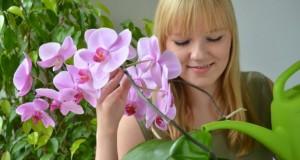 Orchideen brauchen ein wenig Pflege.