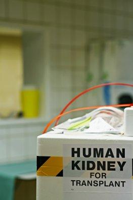 Organspende - Transportbox für transplantierte Organe