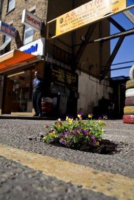 Pothole Gardening in London - Schlaglöcher werden mit Blumen beflanzt