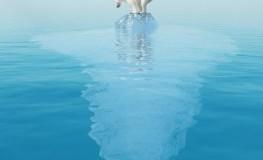 Rekordschmelze - ein Eisbär auf dem letzten Eisberg in der Arktis