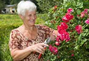 Rosenpflege: Rosen beschneiden
