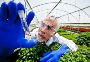 Salvia Divinorum enthält Salvinorin A ein starkes Halluzinogen