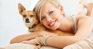 Schönheitschirurgie für Hunde ist im Trend.