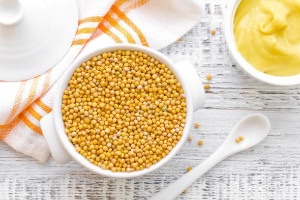 Frischer Senf aus Senfkörner machen.