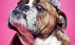 Skurril - Hündin mit Krone auf dem Kopf