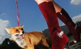 Stillvoll - Junge Frau mit einem Fuchs an der Leine