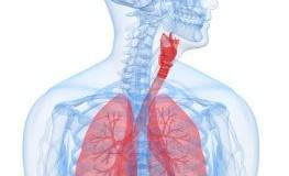 Strahlenschäden - der menschliche Körper