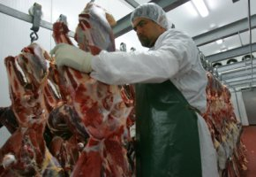 Straußenfleisch - bei der Fleischverarbeitung