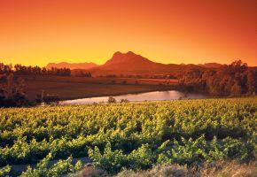 Südafrika: Weinberge bei Paarl