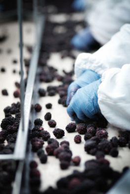 Tiefkühlkost - Industrielle Verarbeitung von Obst