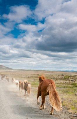 Tiere fliehen vor Naturkatastrophen
