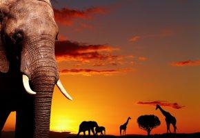 Tiere im Kruger-Nationalpark