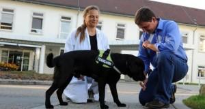 Tierische Therapeuten wie Hunde erschnüffeln Krebs.