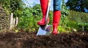 Urban Farming: Selbstversorgung mit dem eigenen Garten