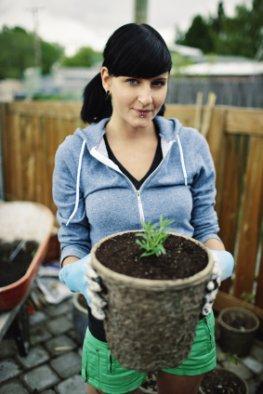 Urban Gardening - Begrünung in Modulen
