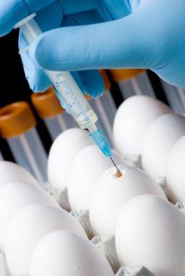 Vogeleier Analyse - Impfstoffherstellung im Labor