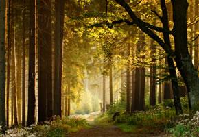 Der Westerwald bietet wunderschöne Wald und Wanderwege
