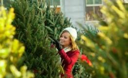 Weihnachtsbaum einkaufen