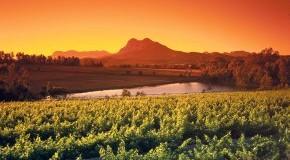 Weinberge bei Paarl in Südafrika