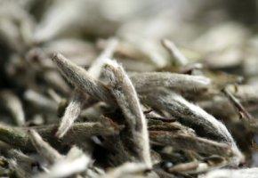 Weißer Tee - Chinesischer Yin Zhen Silver Needle