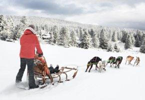 Hundeschlittentour - Wir genießen die Landschaft von Hemsedal