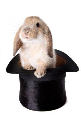 Zaubertricks - das Kanninchen aus dem Zylinder