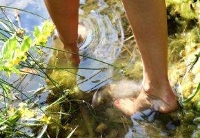 Zerkariendermatitis - Vorsicht beim Baden im Badesee