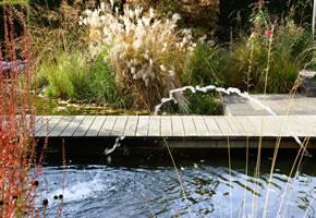 Ziergräser am Teich im Garten
