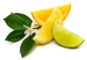 Zitrusfrüchte - Orange, Zitrone und Limone
